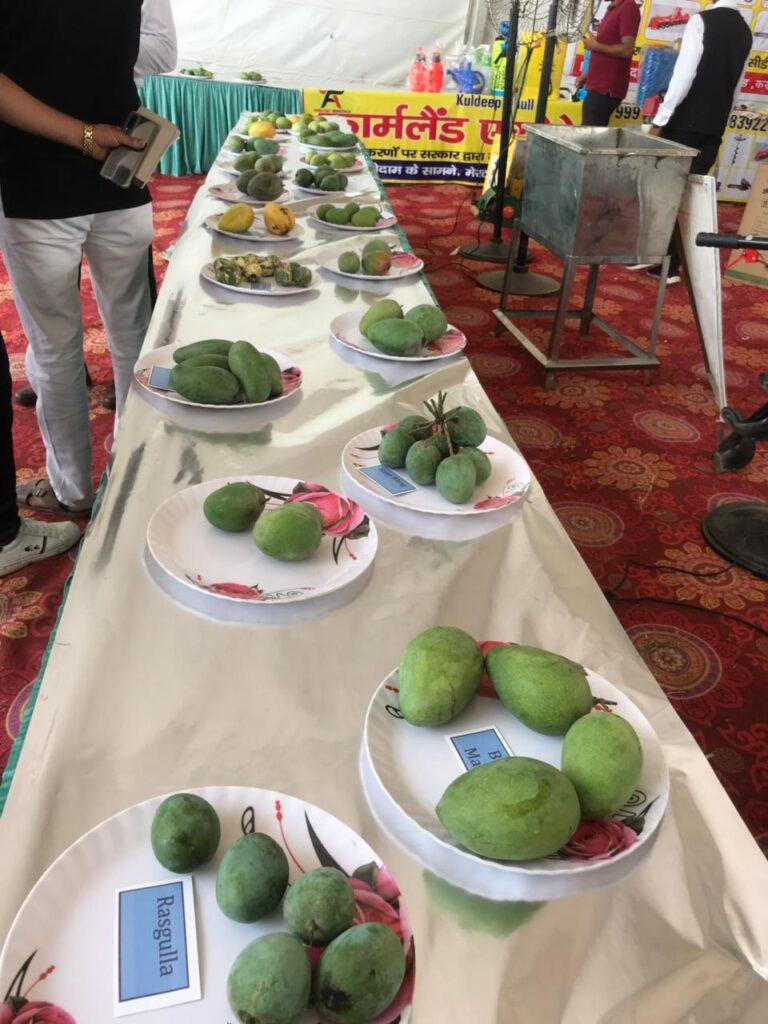 विदेशों में भी फलों के राजा चौसा लंगडा आम का स्वाद चख रहें है लाखों लोग